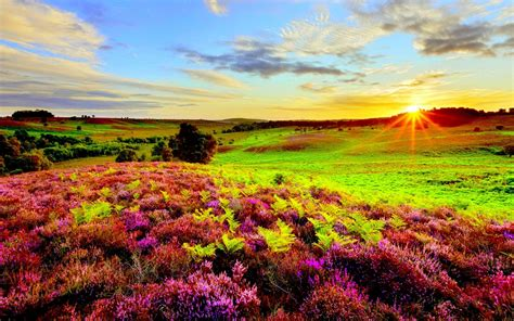 Nature Purple Flowers Green Grass Meadow With Sun Rays